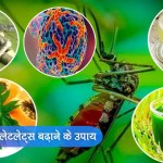 How To Increase Platelets In Dengue