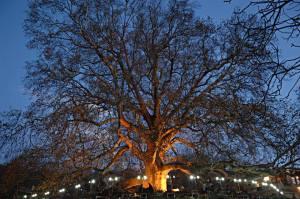 شجرة الإنكا التاريخية