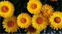most-beautiful-flowers-40-photos-21