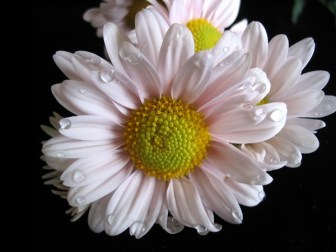 most-beautiful-flowers-40-photos-34