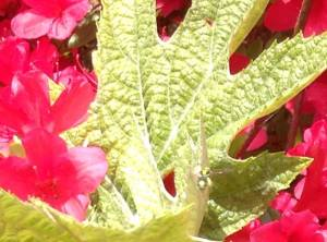 Bright green sweat bee