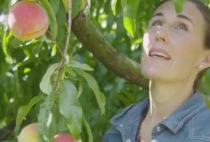 Elizabeth picks white peaches.