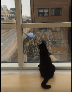 the window cleaner and the cat