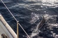 across-the-atlantic-10