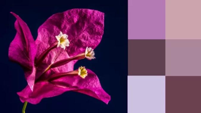Colors-2016-Purple