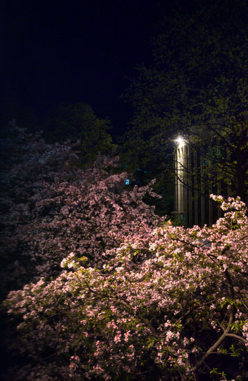 Nightflowers chris combs life in frame for Adelphi university garden city