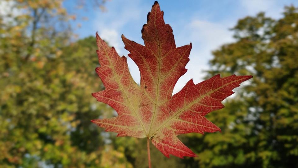 Fritidshold holder efterårsferie