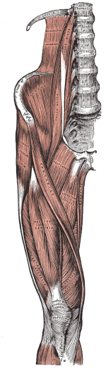 Lannesuoliluulihas