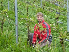 WorkAway - (n tends vines)