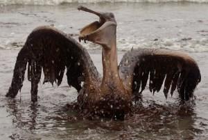 Oil pelican