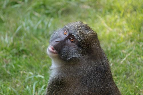 sm_monkey