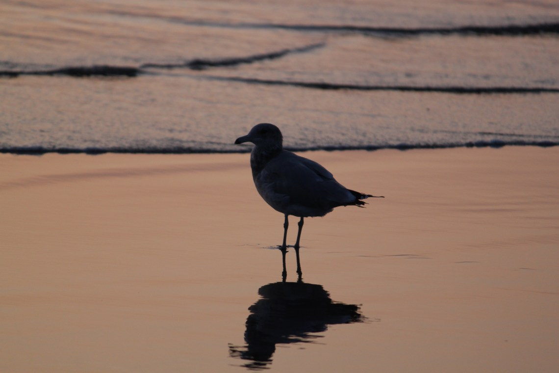 Working Tuesday through Saturday could leave you free as a bird at the beach!