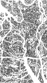 trees_edges