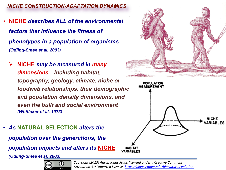 The Human Niche An Overview