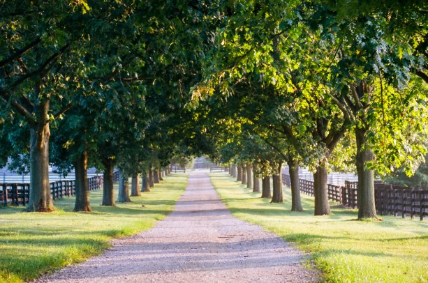 Idyllic lane on a horse farm