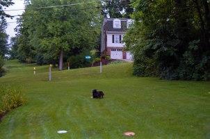 Brisby & a Frisbee