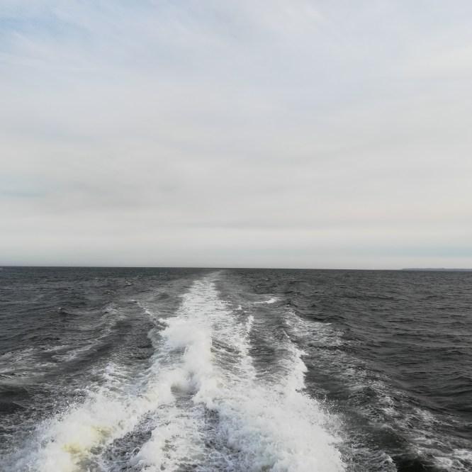 """""""Sargassum in the Black Atlantic"""" Selected as 2019 Atlantic Studies Early Career Essay Award"""