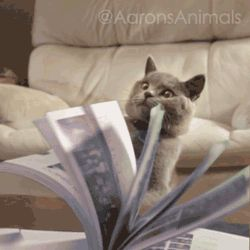 Look_At_Me_I_Love_Reading