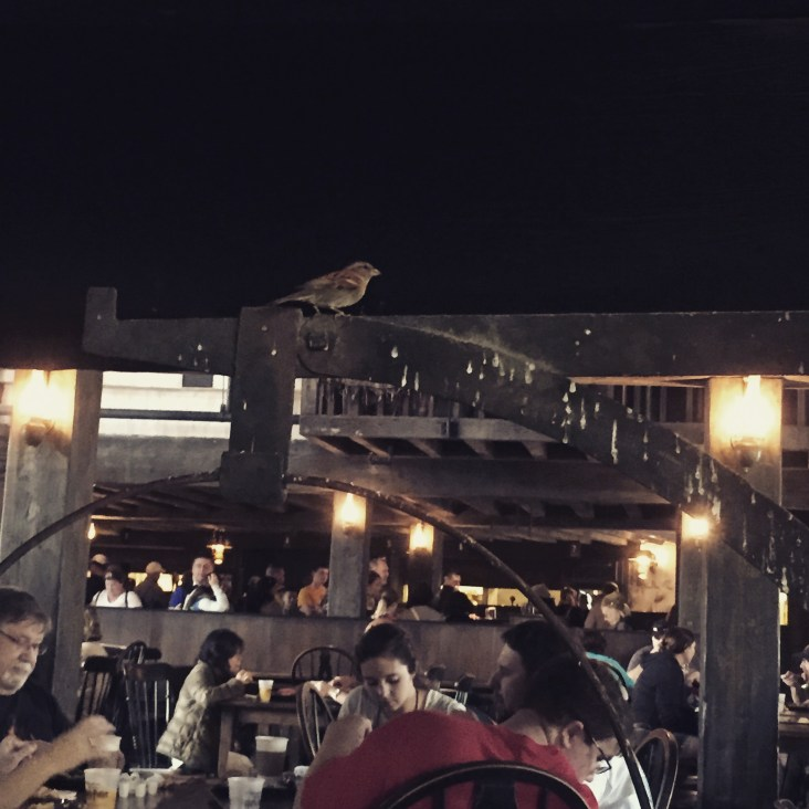 Bird buddy at Three Broomsticks