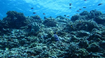Diving in Gili