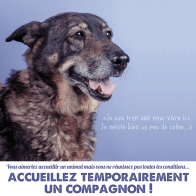 cause animale famille accueil vieux chien