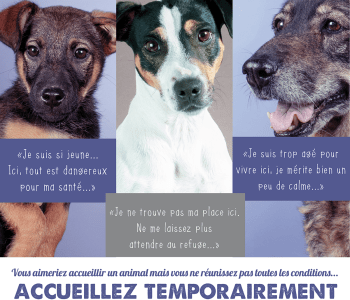 cause animale famille accueil