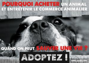 cause animale adoption