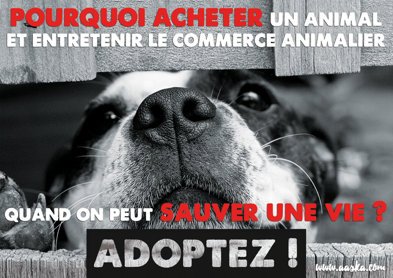 cause animale adoption