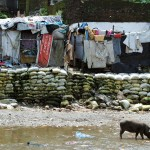 M Bindal Slum & Pig