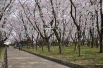 shonai park nagoya japao-14