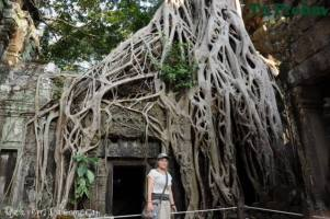 ta prohm jaque