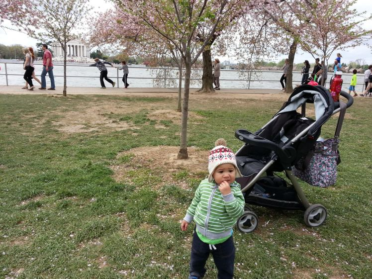My son's first time seeing the Cherry Blossoms, Washington, DC