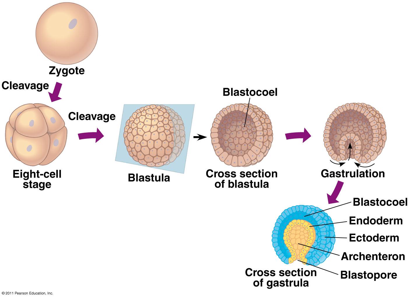 Organismal Biology