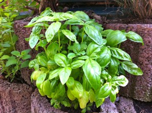 Ahhh, my basil is undisturbed and can finally grow in peace.