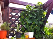 And threatening my Aloe plants too!