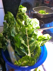 Freshly washed Chard with trimmed stems sitting in cold water.