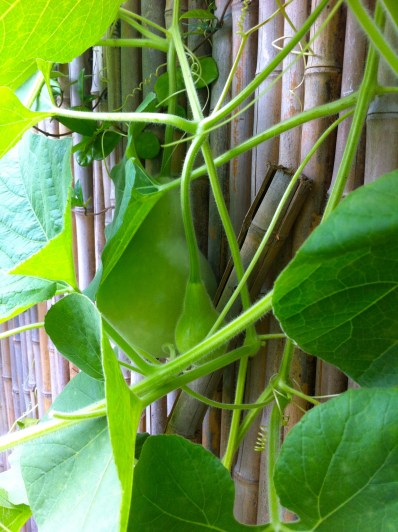 and the fruit of this vine will be interesting to taste.