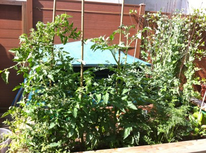 The tomatoes and peas are making a jungle of my highbed...I'm probably going to have spacing problems yet again this year.