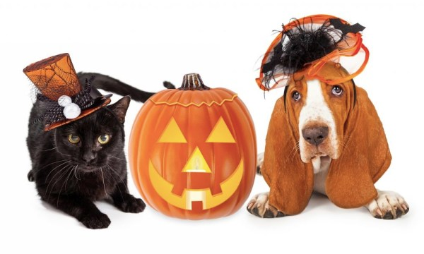 How To Style Our Pet on Halloween? | Halloween Pet Costume
