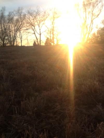 Sunset Trees2