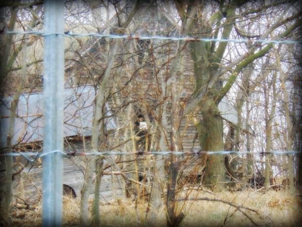 Through the Trees8-Eklund