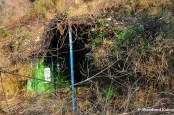 Overgrown Hut