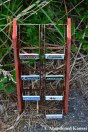 Rusty Gum Display