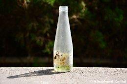 Abandoned Soda Bottle
