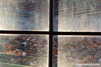 Dirty Youth Hostel Window