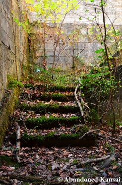 Overgrown Staircase