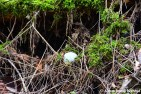 Abandoned Golf Ball