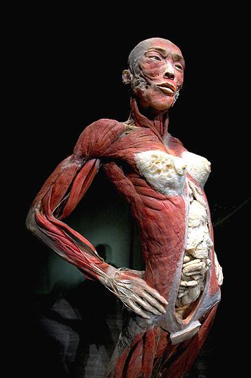 Corpi umani in mostra a Barcellona