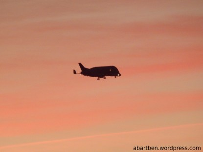 Beluga on his approach after the sunset.