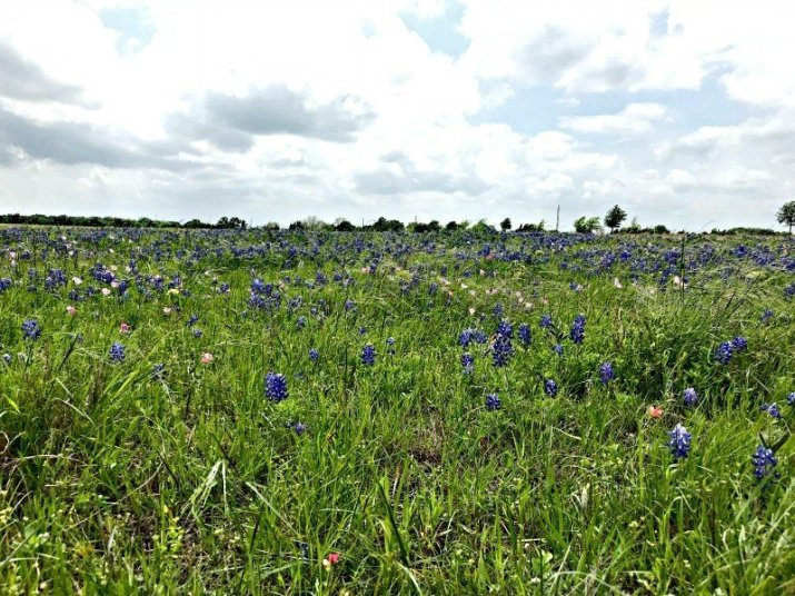 The Wild Texas Bluebonnets were in full bloom in the fields and farms. A few more Round Top Shopping Trip Tips and some photos from the Junk Gypsy Headquarters. A shopping trip to Round Top and Waco would make a perfect weekend, guys! #AbbottsAtHome #RoundTopTexas #JunkGypsy #GirlsWeekend